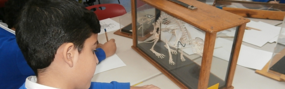 Website header